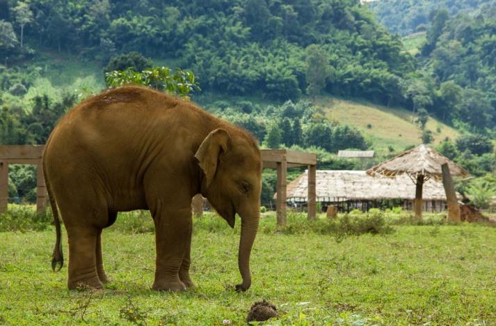 Baby Elephant Paz Mercadal