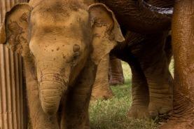 bebe elefante Paz Mercadal