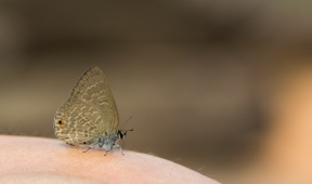 Butterfly Paz Mercadal