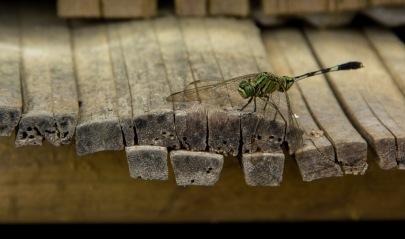 Dragonfly Paz Mercadal