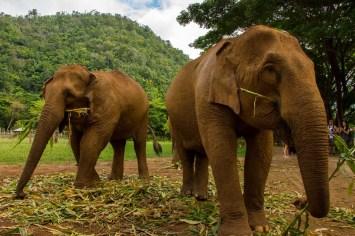 Elephants Paz Mercadal