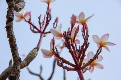 Flower Paz Mercadal