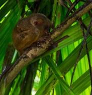 little Monkey Paz Mercadal