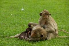 Monkey Paz Mercadal