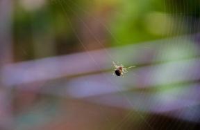 Spider Paz Mercadal
